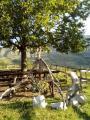 Lepo urejena okolica Koče na planini Kuhinja